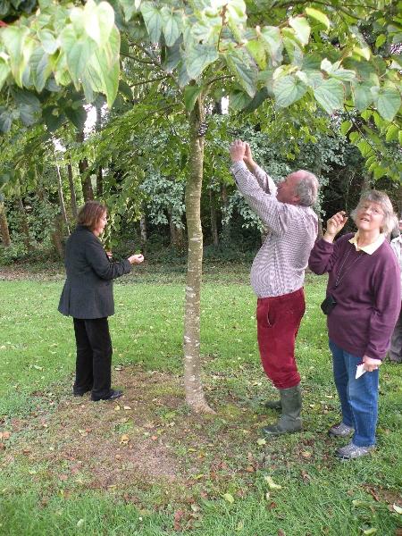 jfk-arboretum-24-9-2011-m-of-p-h-and-m-g-admiring-tetracentron-photo-jim-white