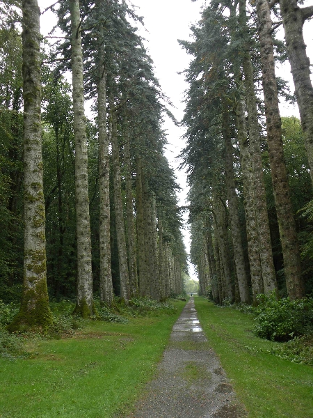 woodstock-inistioge-25-9-2011-abies-procera-glauca-avenue-in-downpour-88-trees-planted-1878-20-replacement-trees-2000-photo-jim-white
