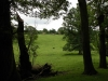 tynan-abbey-17-6-2012-fallen-trees-in-parkland-preserved-photo-jim-white