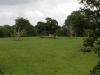 tynan-abbey-17-6-2012-fallen-trees-in-preserved-parkland-photo-jim-white