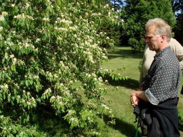 Lonicera quiquelocularis + Aubrey Fennell - Exbury