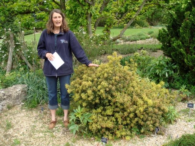 Quercus monimotricha (17yo) with Fran Zaenglein Head Gardener at Hilliers