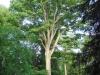 Westonbirt - exceptional oak
