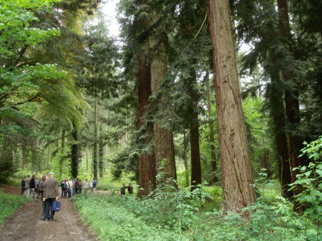 Mature trees at Longleat