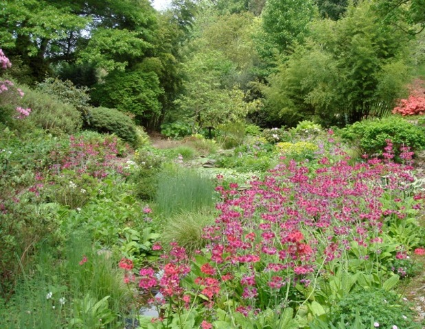Water Garden at Hilliers